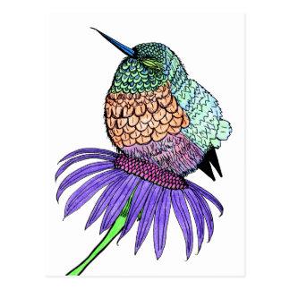 Flaumiger Baby-Kolibri Postkarte