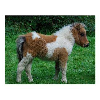 Flaumiges entzückendes Dartmoor Pony Postkarte