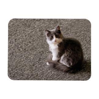 Flaumiges Kätzchen Magnet