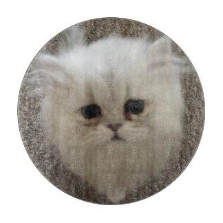 Flaumiges Sasquach, das Kitty mit niedlichem