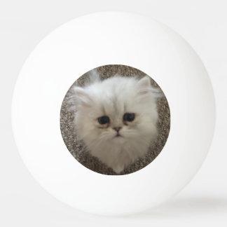 Flaumiges Sasquach, das Kitty mit niedlichem Tischtennis Ball