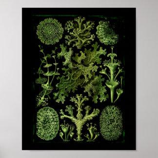 Flechten im Grün und im Schwarzen Poster
