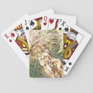 Flechten-und Luft-Pflanzen-Spielkarten Spielkarten