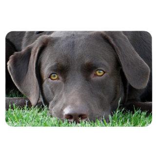 Flexi Magnet Labrador Lorenzo