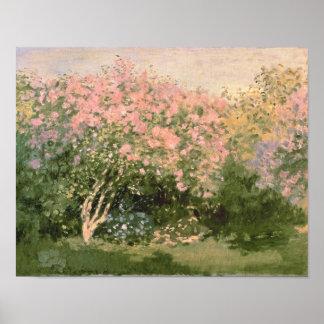 Flieder Claude Monets | im Sun, 1873 Poster