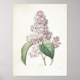 Flieder oder Lilas Poster