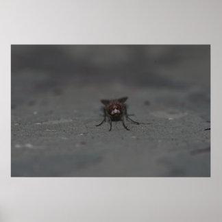 Fliege - mit Blitz Poster