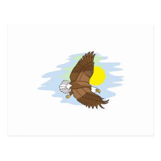 Fliegen Eagle Postkarte