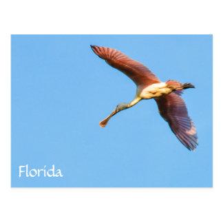 Fliegen-FloridaSpoonbill Postkarte