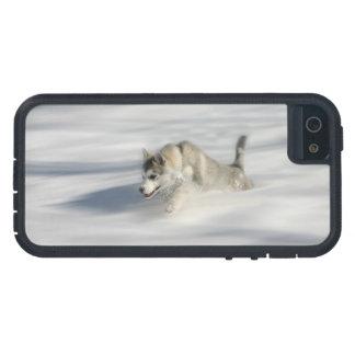 Fliegen in einen Huskys Traum - iPhone 5 Fall Etui Fürs iPhone 5