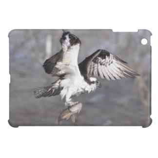 Fliegen-Osprey-u. Fisch-Tier-Foto-Szene Hüllen Für iPad Mini