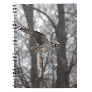 Fliegen-Osprey-u. Fisch-Tier-Foto-Szene Notizblock