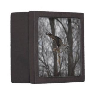 Fliegen-Osprey-u. Fisch-Tier-Foto-Szene Schachtel