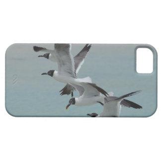 Fliegende lachende Möven Etui Fürs iPhone 5