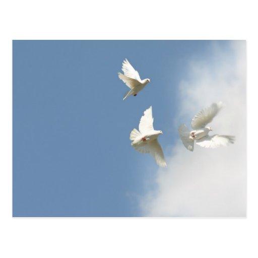 Fliegende weiße Tauben Postkarte