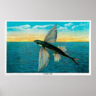 Fliegender Fisch in Catalina-Insel Poster