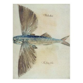 Fliegender Fisch Postkarte