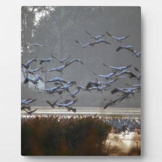 Fliegenkräne auf einem See Fotoplatte