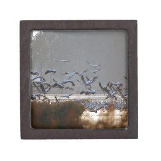 Fliegenkräne auf einem See Schmuckkiste
