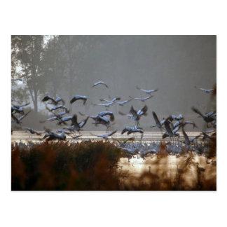 Fliegenkräne Postkarte