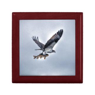 FliegenOsprey mit Foto der Hornhautfleck-Fisch-HDR Erinnerungskiste