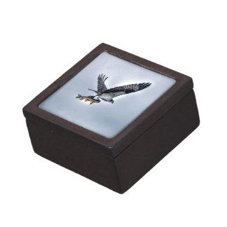 FliegenOsprey mit Foto der Hornhautfleck-Fisch-HDR Kiste