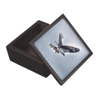 FliegenOsprey mit Foto der Hornhautfleck-Fisch-HDR Schachtel