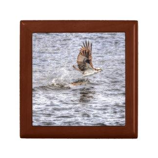 FliegenOsprey u. Tier-Foto-Geschenk der Fisch-HDR Geschenkbox
