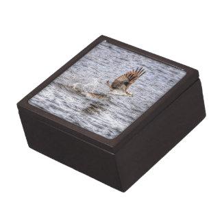 FliegenOsprey u. Tier-Foto-Geschenk der Fisch-HDR Kiste