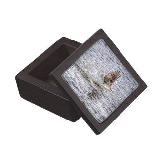 FliegenOsprey u. Tier-Foto-Geschenk der Fisch-HDR Schachtel