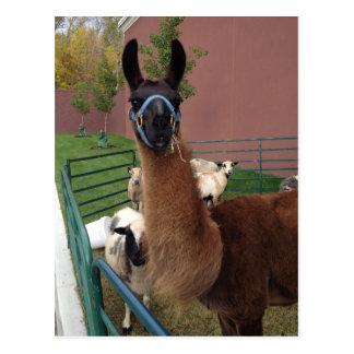 Flockige Lama-Postkarte Browns Postkarte