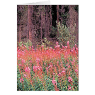 Flora - Wildblumen - Fireweed Karte