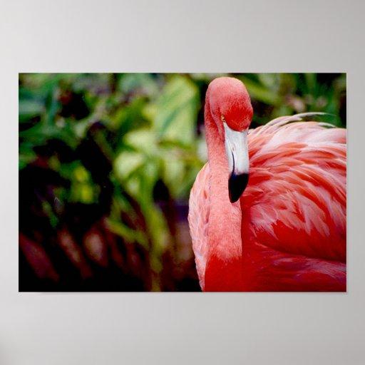 Florida-Flamingo 1 Plakatdrucke