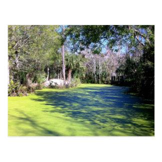 Florida-Fluss-Wildnis Postkarte