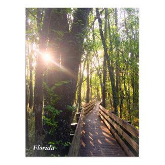 Florida-Morgensonnenaufgangpostkarte Postkarte