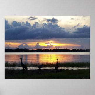 Florida-Sand-Kran-Vögel, die an Sonnenuntergang Poster
