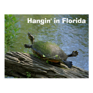 Florida-Schildkrötepostkarte Postkarte