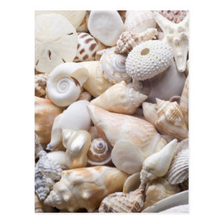 Florida-SeeMuschel-Hintergrund - Strand-Muscheln Postkarte