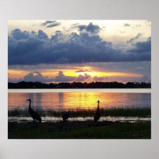 Florida-Sonnenuntergang mit tropischen Vögeln Poster