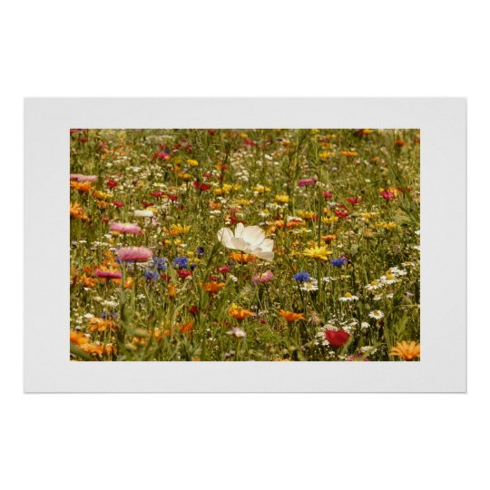 Flower - Meadow Poster