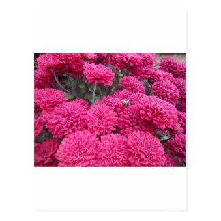 Flowers-001.JPG Postkarte