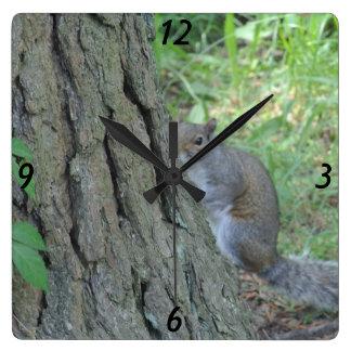Flüchtiger Blick ein Boo-Eichhörnchen - Quadratische Wanduhr