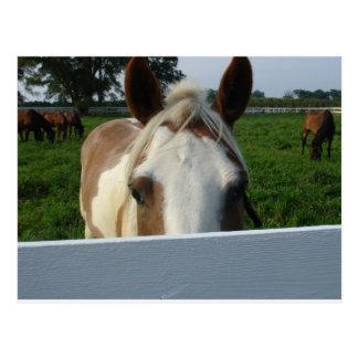 Flüchtiger Blick ein Boo-Pferd Postkarte