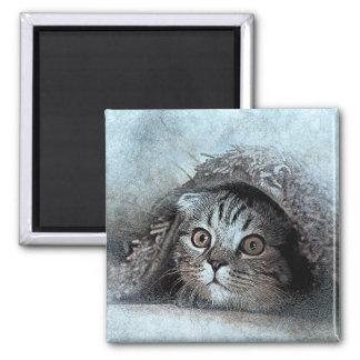 Flüchtiger Blick ein Bookitty-Porträt| abstrakter Quadratischer Magnet