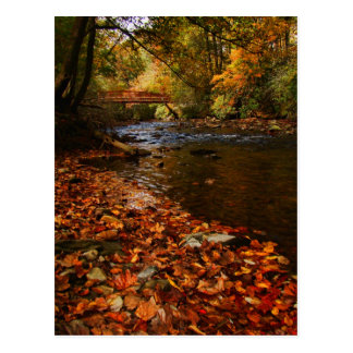Fluss des Blätter Postkarte