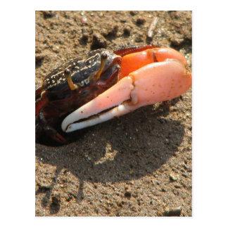 Fluss-Krabbe Postkarte