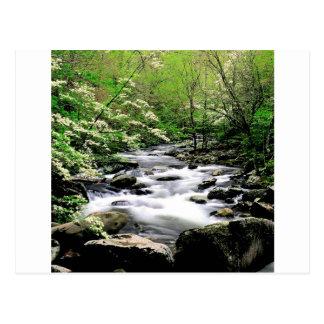 Fluss mittleres Prongdogwoods rauchiges Tennesse Postkarte