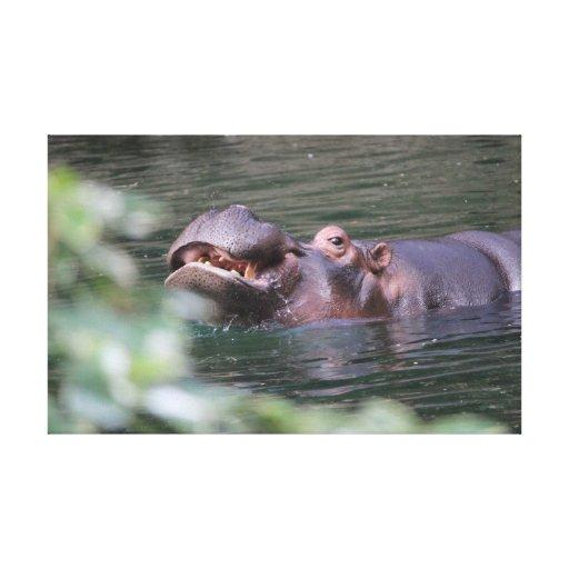 Flusspferd auf Leinwand Gespannter Galeriedruck