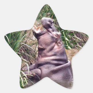 Flusspferd-Brüllen, Stern-Aufkleber