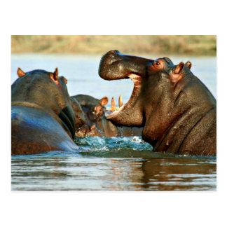 Flusspferd - Fluss-Pferd Postkarte